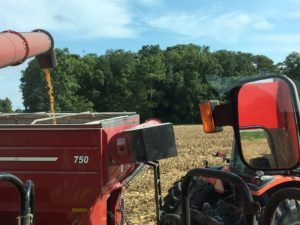 Cover photo for 2018 Pasquotank Corn Variety Trial: Yield Data Available