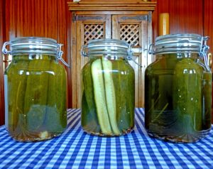 photo jars of canned dill pickles
