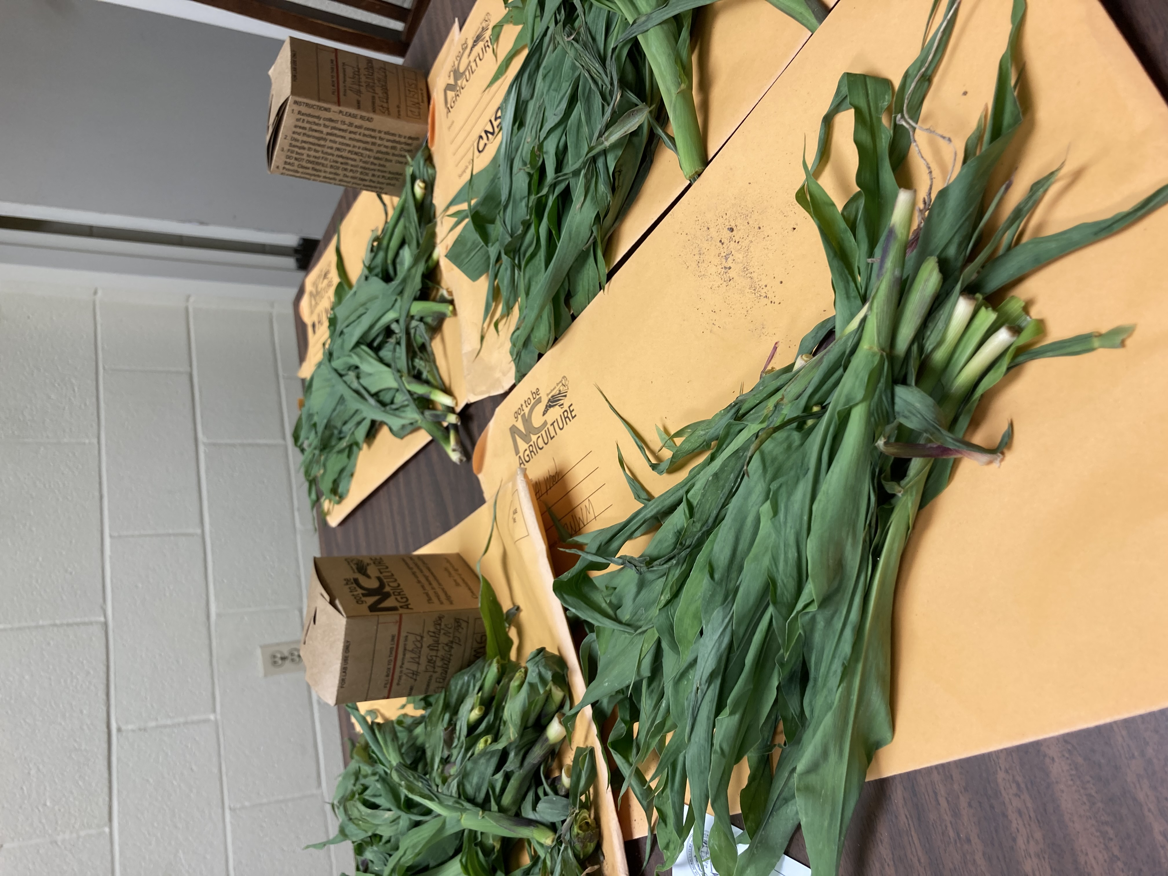 Plant tissue samples ready for submission and analysis by the North Carolina Department of Agriculture & Consumer Services Agronomic Division.